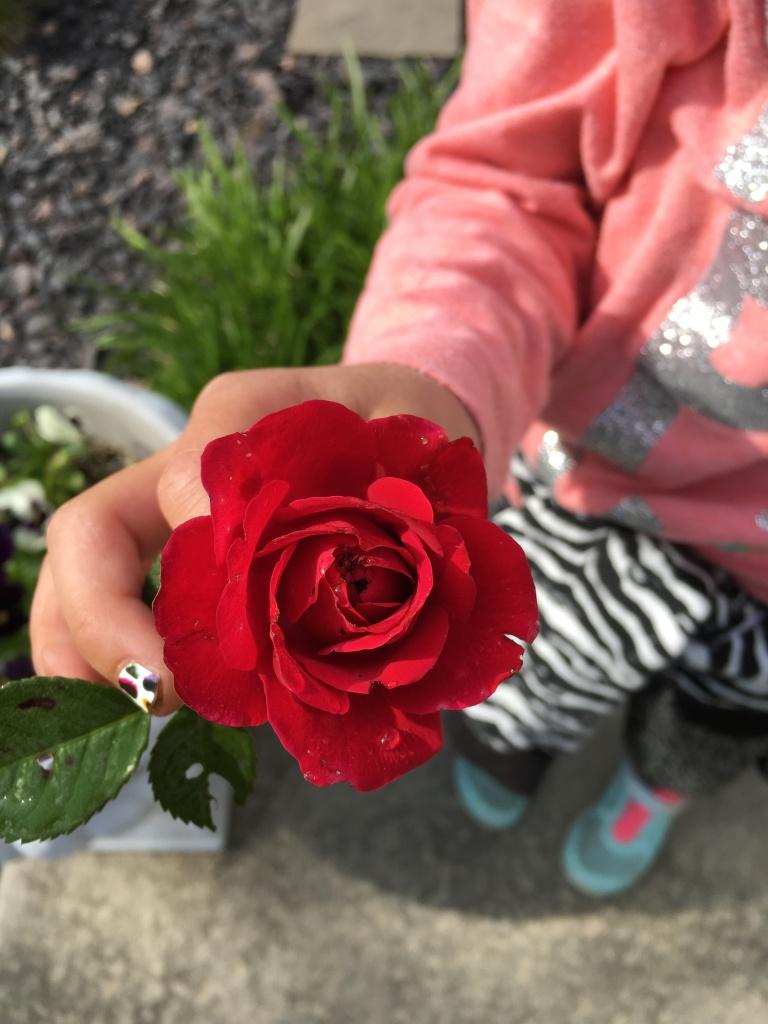 rose-walk