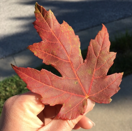 orange-fall-leaf.jpg