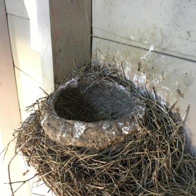 empty nest2